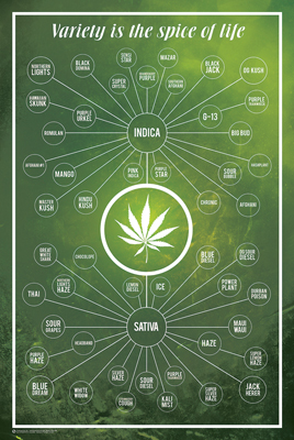 Cannabis - Variety is the Spice of Life